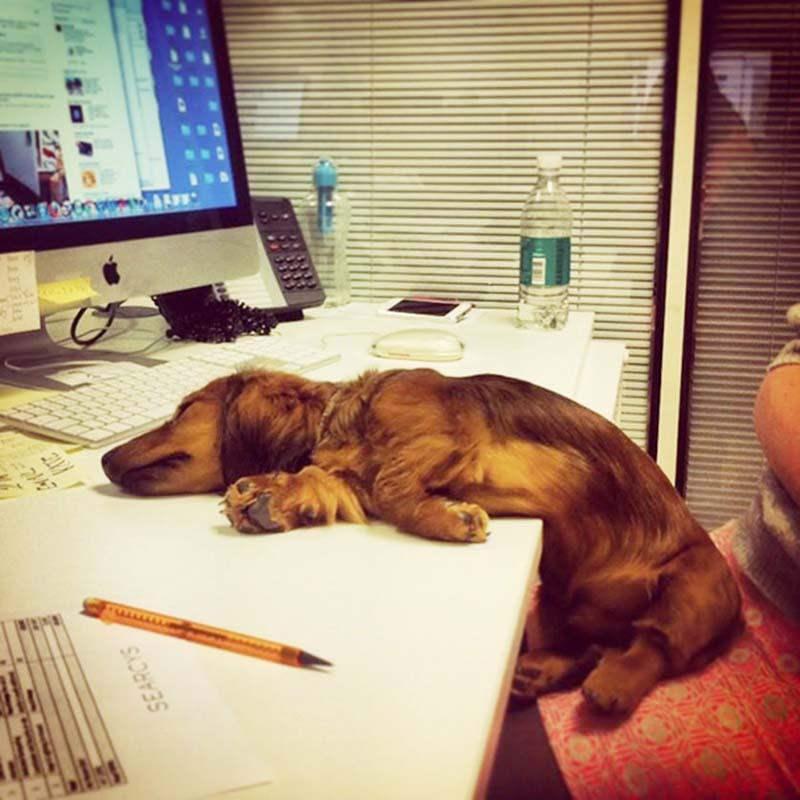 perros-en-el-trabajo-10