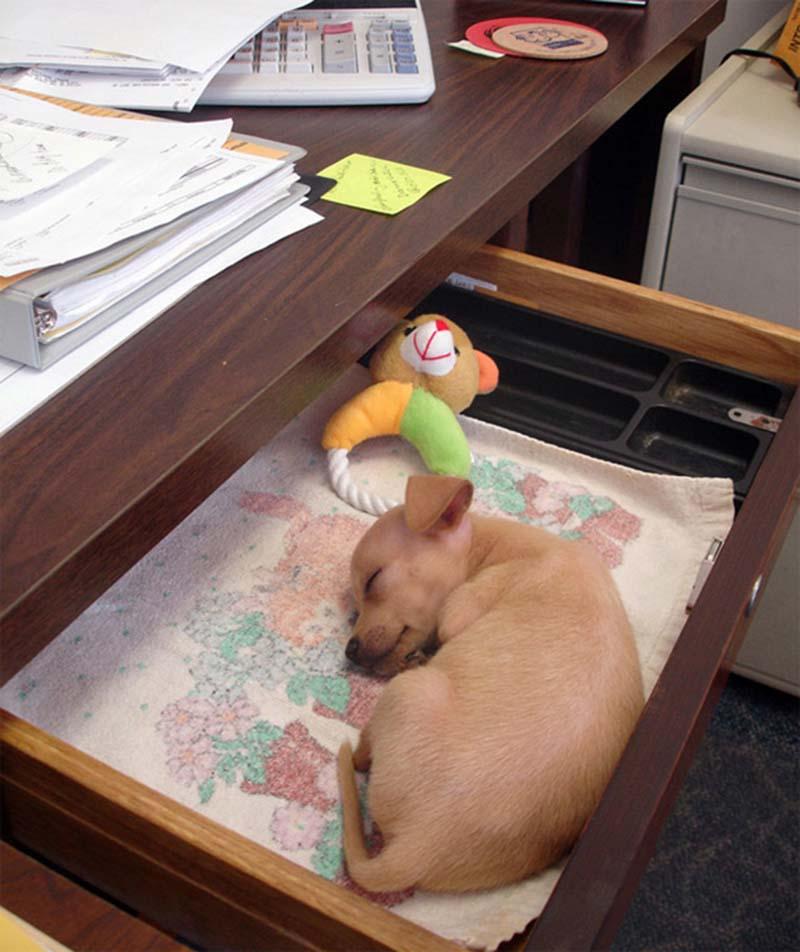 perros-en-el-trabajo-11