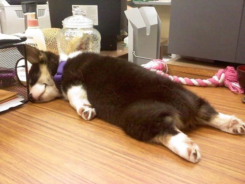 perros-en-el-trabajo-12