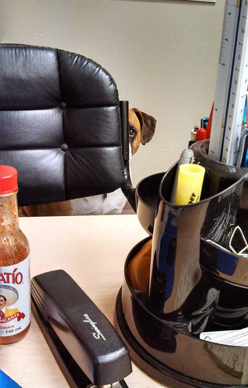 perros-en-el-trabajo-14