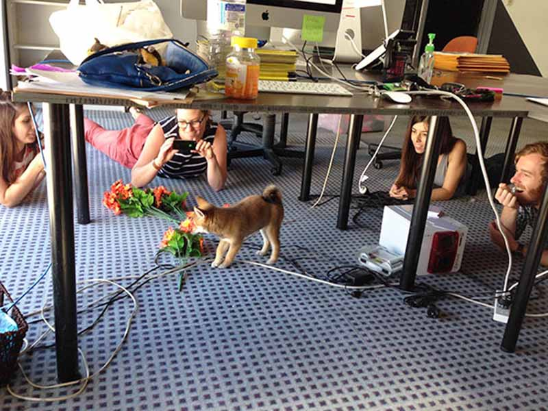 perros-en-el-trabajo-3