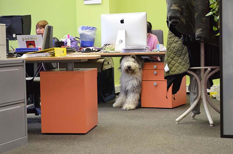 perros-en-el-trabajo-4