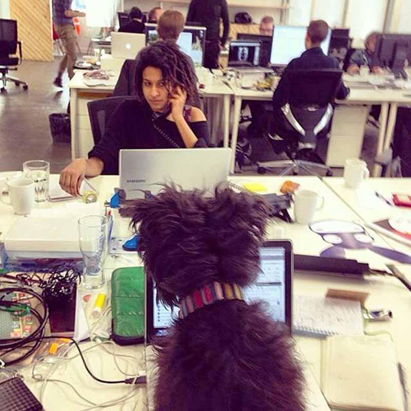perros-en-el-trabajo-5