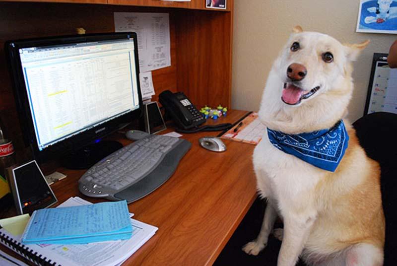 perros-en-el-trabajo-7
