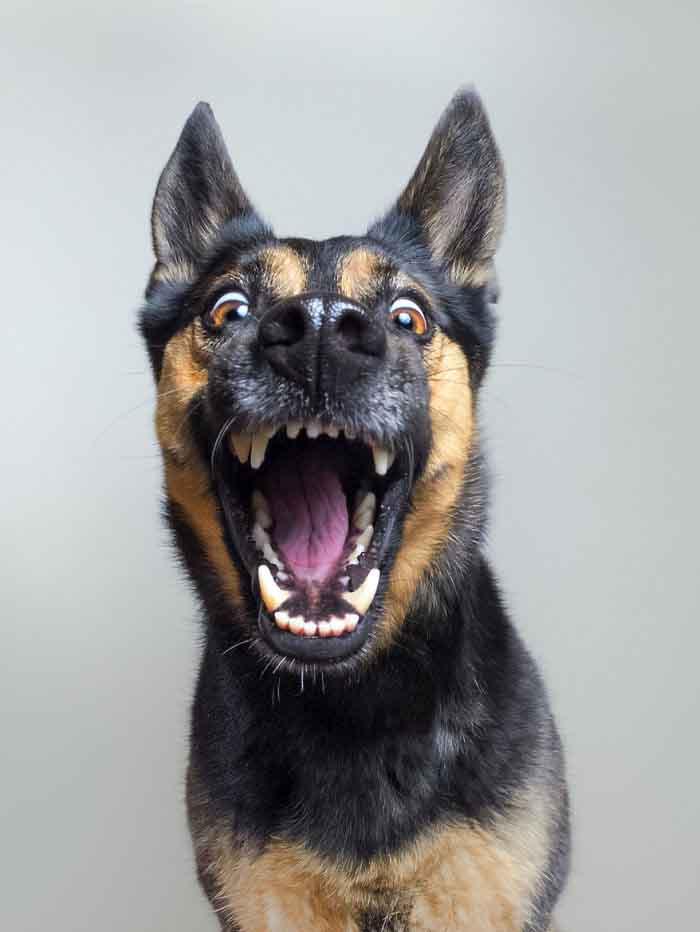 perros-expresivos-1