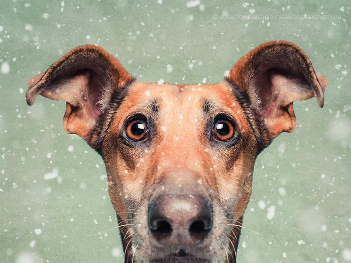 perros-expresivos-12