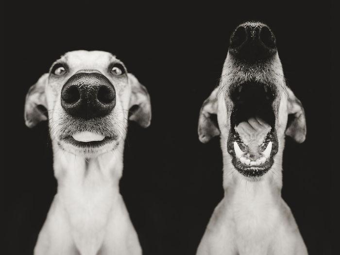 perros-expresivos-13