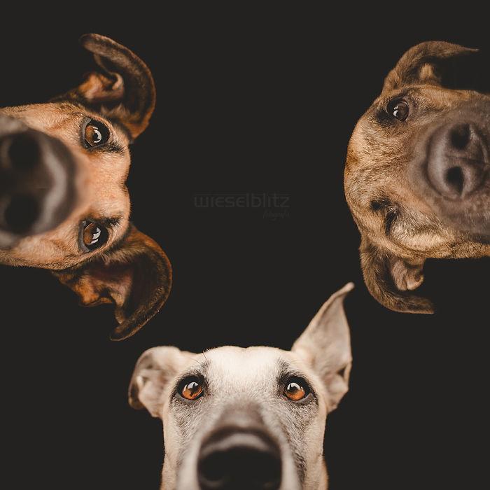Perros expresivos y fotogénicos