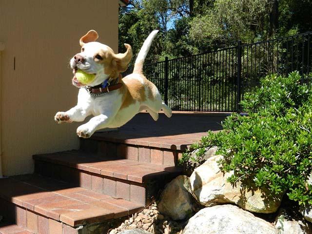 perros-parecen-otro-tipo-de-animal-8