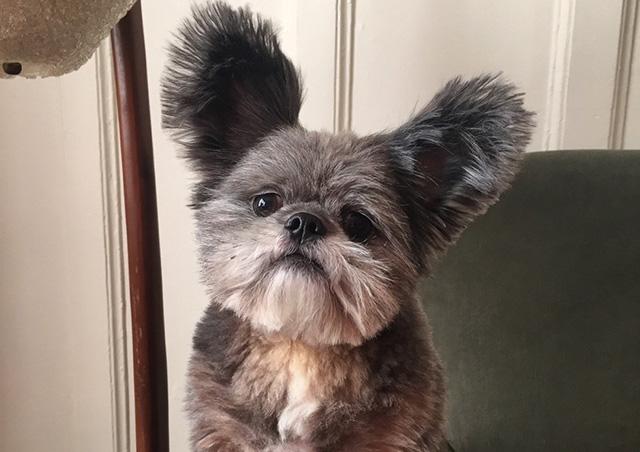 Perros que parecen un animal diferente