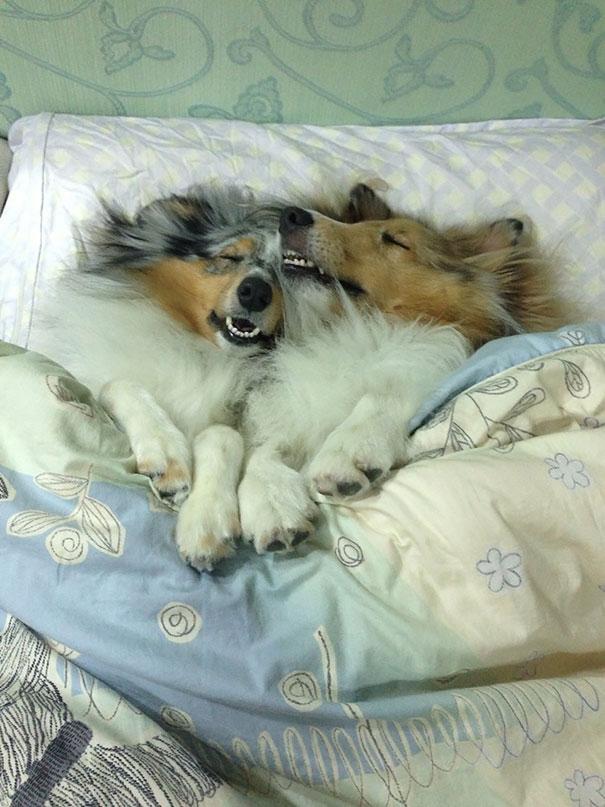 perros-se-adueñan-de-tu-cama-12