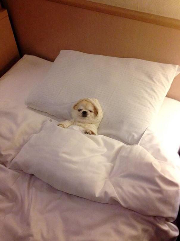 perros-se-adueñan-de-tu-cama-2
