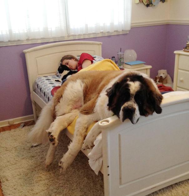 perros-se-adueñan-de-tu-cama-3