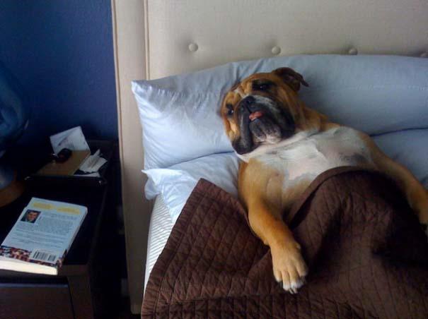 perros-se-adueñan-de-tu-cama-6