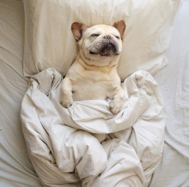 perros-se-adueñan-de-tu-cama-9