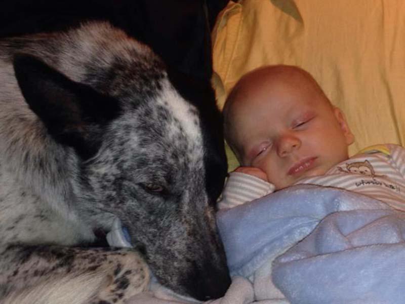 perros-y-bebés-10