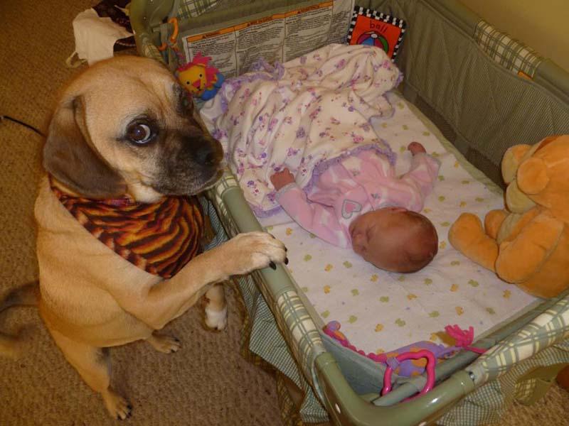 perros-y-bebés-11