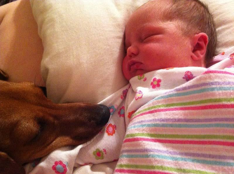 perros-y-bebés-14