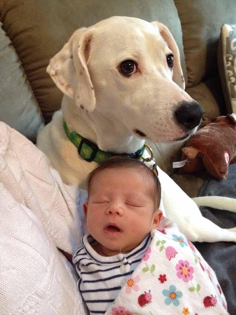 perros-y-bebés-15