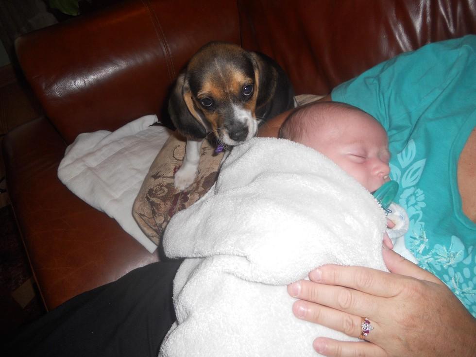 perros-y-bebés-16