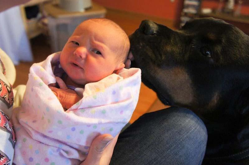 perros-y-bebés-17