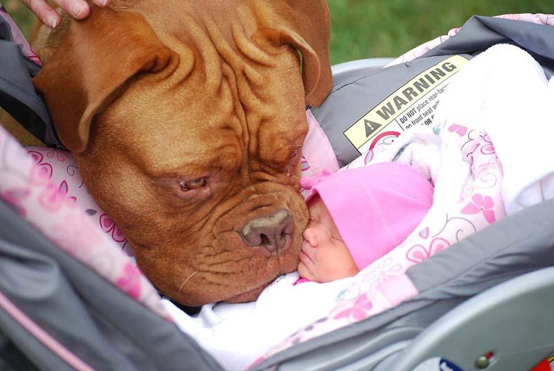 perros-y-bebés-2