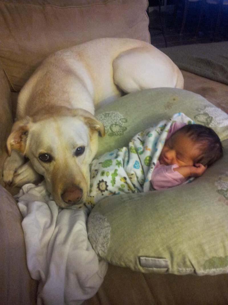 perros-y-bebés-21