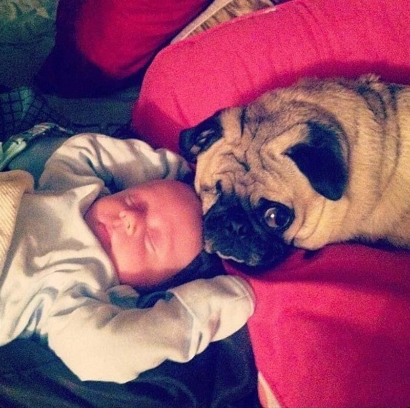 perros-y-bebés-22
