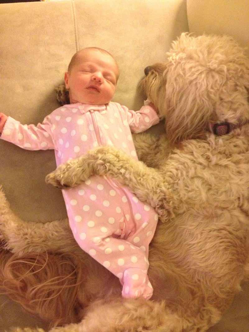 perros-y-bebés-24