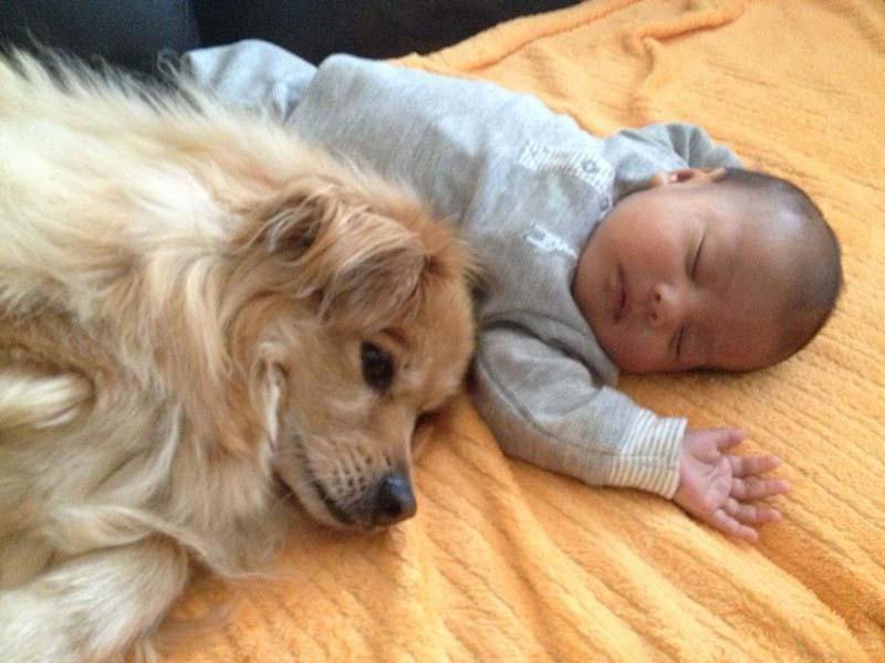 perros-y-bebés-25
