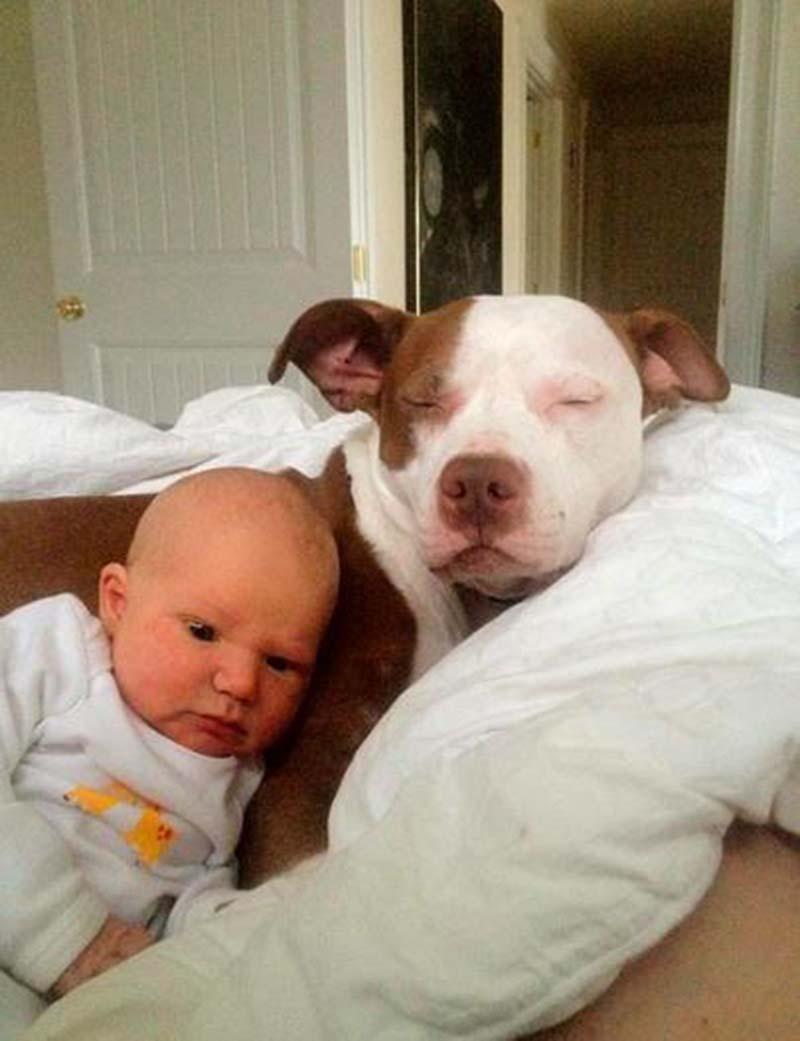 perros-y-bebés-26