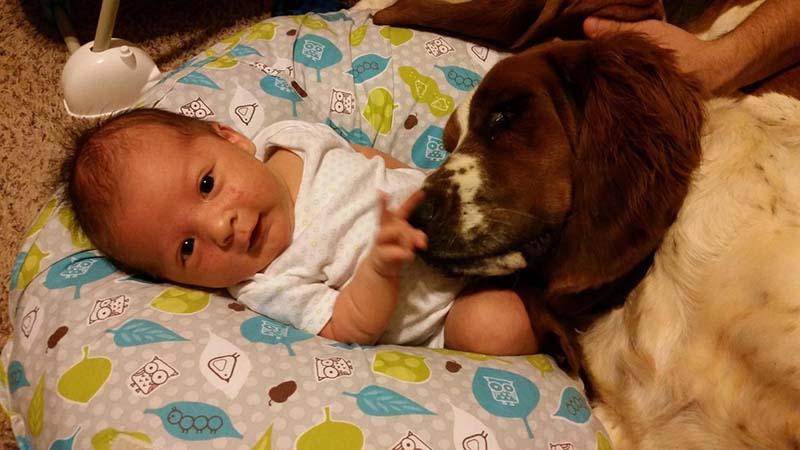 perros-y-bebés-27