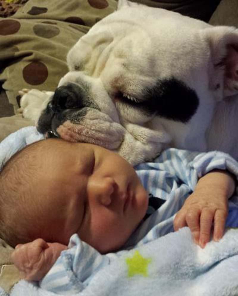 perros-y-bebés-29