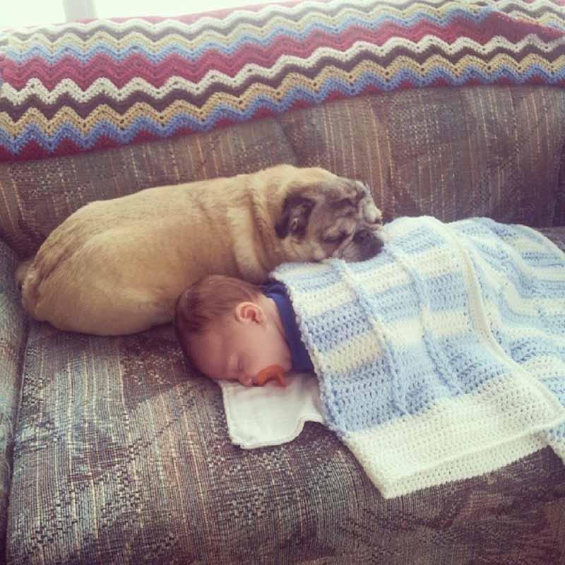 perros-y-bebés-3