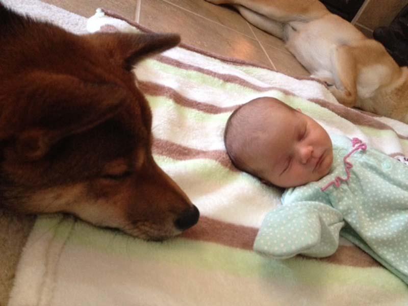 perros-y-bebés-5