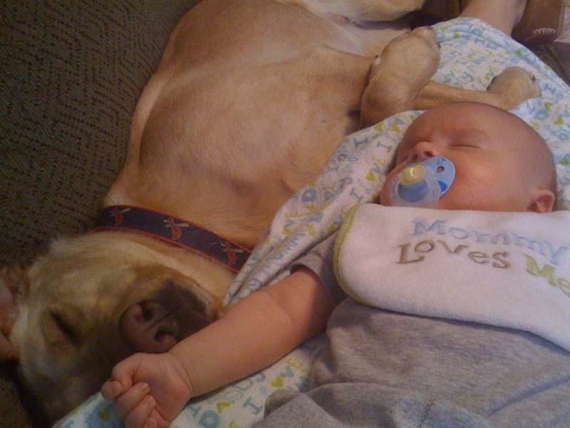 perros-y-bebés-6