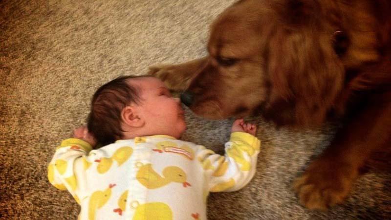 perros-y-bebés-7