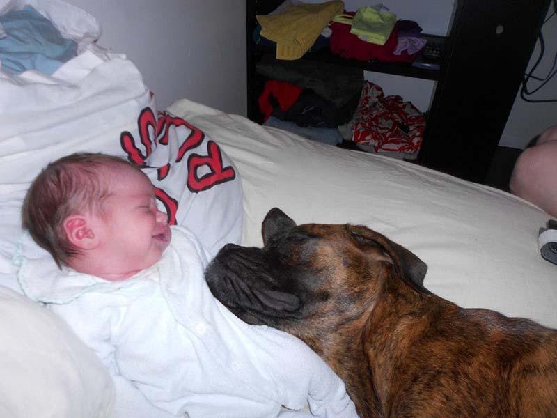 perros-y-bebés-8