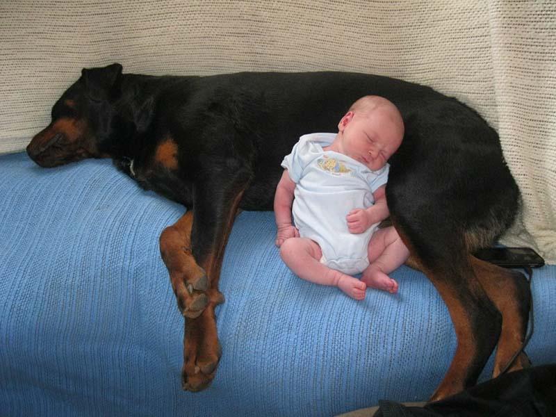 perros-y-bebés