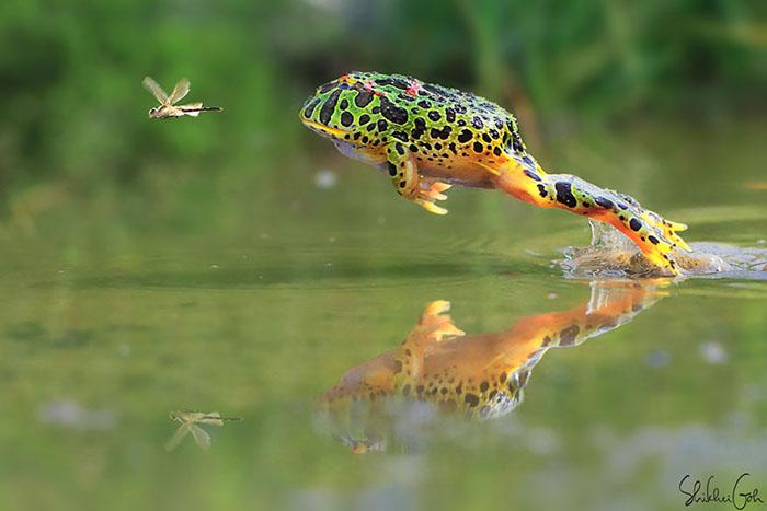 ranas-y-sapos-raros-11