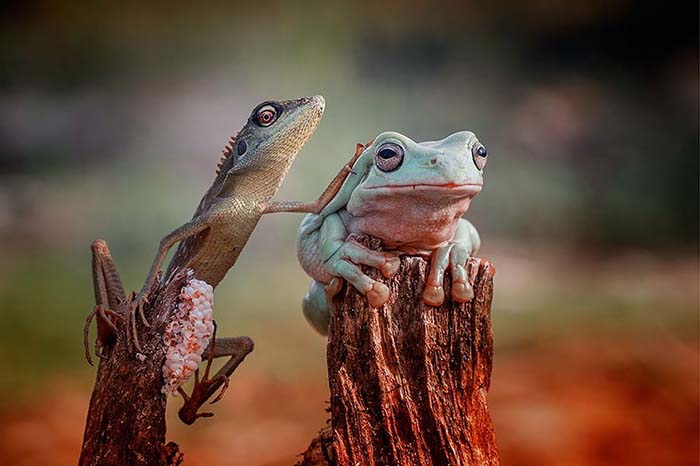 ranas-y-sapos-raros-16