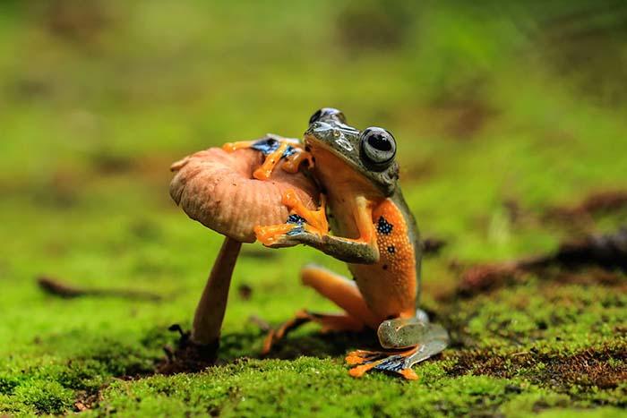 ranas-y-sapos-raros-17