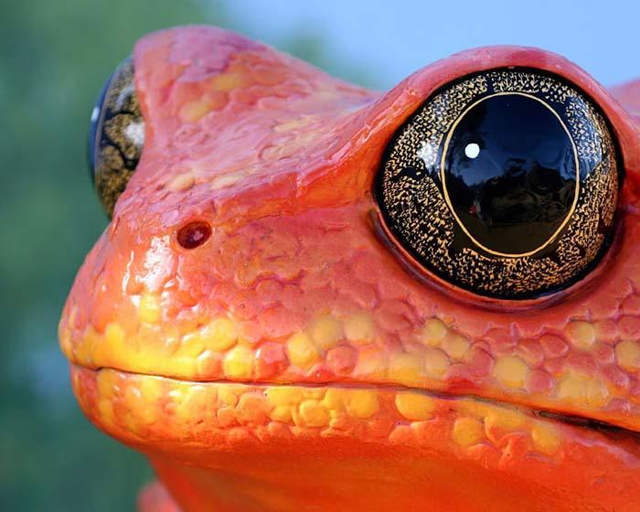 ranas-y-sapos-raros-2