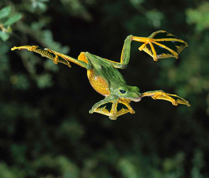 ranas-y-sapos-raros-7