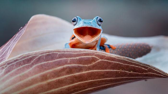 ranas-y-sapos-raros-8