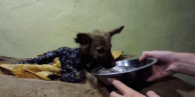 rescatan-perro-cubierto-de-alquitran-2
