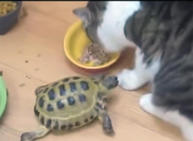 tortuga-le-gusta-morder-gatos