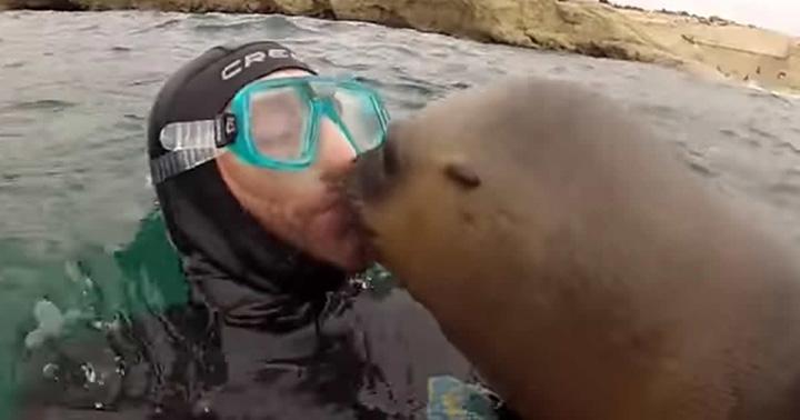 Leones marinos dando besos