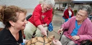 Tortuga rescatada en hogar de ancianos