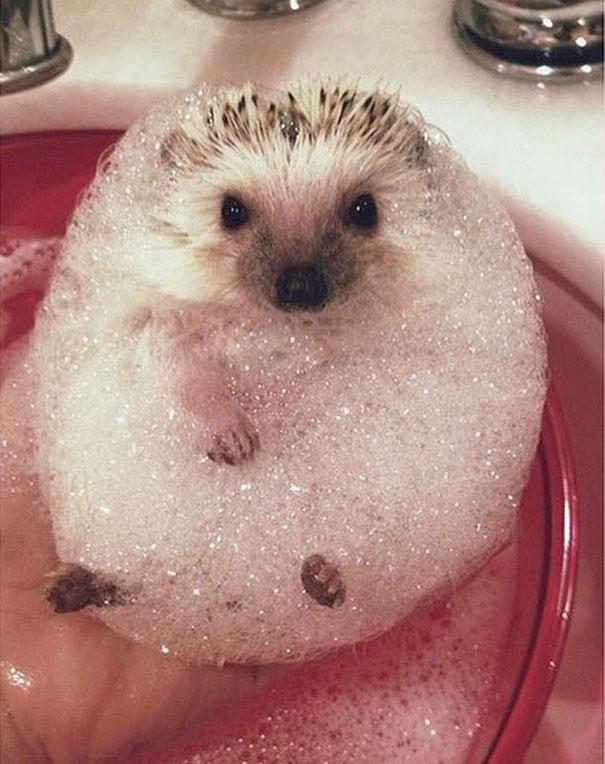 animales-les-gusta-el-baño-10